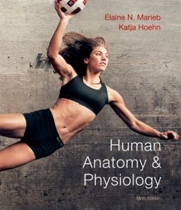 Test Bank for Human Anatomy & Physiology, 9th Edition, Elaine N. Marieb, ISBN-10: 0321743261, ISBN-13: 9780321743268, ISBN-10: 0321802187, ISBN-13: 9780321802187